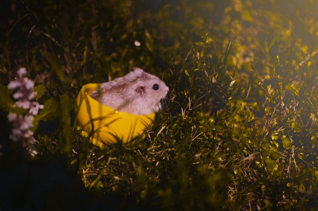 A little mouse plaing in the grass