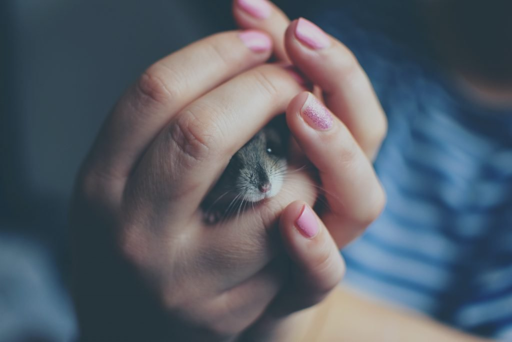 Person holding a little mice